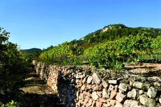 Vés a: DO Montsant, vins que estimen i parlen de la terra