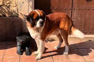 Vés a: Cinc encaputxats assalten una masia del Gironès ruixant la propietària i el gos amb extintors