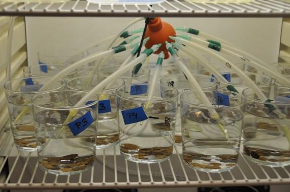Vés a: Alerta pels efectes de les substàncies químiques tòxiques dels rius sobre la vida aquàtica