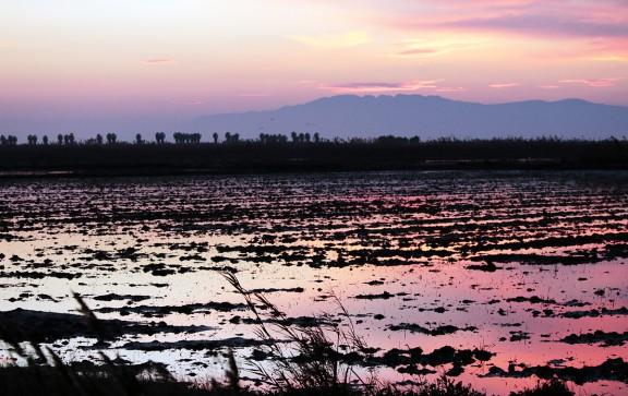Vés a: El Parc Natural del Delta de l'Ebre renova la Carta Europea de Turisme Sostenible fins al 2021