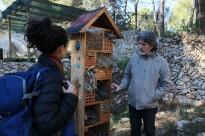 Vés a: Rècord de proliferació dels eixams d'abelles