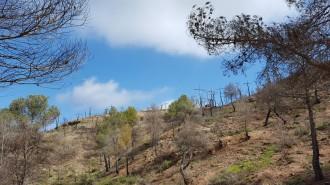 Vés a: La gestió forestal després d'un incendi, a debat amb els propietaris de boscos