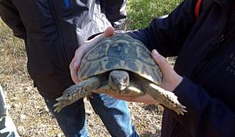 Vés a: Alliberen 300 exemplars de tortuga mediterrània al Parc Natural del Garraf