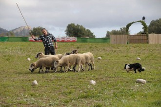 Vés a: Folk, pagesia i gossos d'atura, entre les cinc propostes per al cap de setmana
