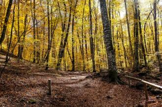 Vés a: Can Trona acull una jornada tècnica sobre els boscos madurs de Catalunya