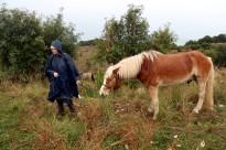 Vés a: La possible esterilització dels senglars enfronta animalistes i caçadors
