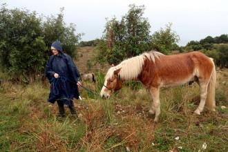 Vés a: Una vintena de cavalls fan el camí ramader de la Marina per passar l'hivern al Parc del Garraf
