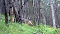 Vés a: Unió de Pagesos denuncia mancances en la gestió cinegètica de la fauna salvatge a les comarques gironines
