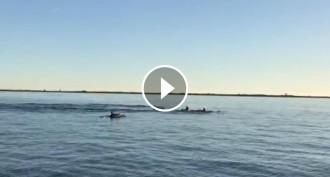 Vés a: VÍDEO Albiren un grup de dofins a la badia dels Alfacs, a Sant Carles de la Ràpita
