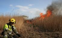 Vés a: Cremes controlades al Parc Natural del Delta de l'Ebre per regenerar el senill
