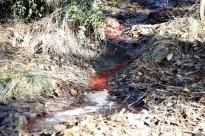Vés a: Alerta de pèrdues en la collita d'arròs  al delta de l'Ebre per un fong
