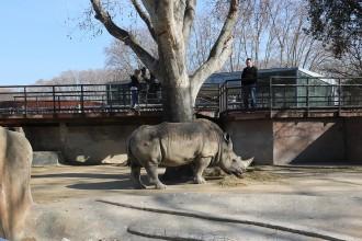 Vés a: Un zoo sense rinoceronts ni ossos: l'equipament barceloní tindrà unes 75 espècies menys