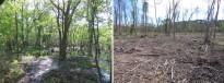 Vés a: La Garrotxa vol identificar i protegir tots els «arbres amb història»