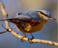 Vés a: Sortida naturalista per a conèixer els ocells de la Moixina a Olot aquest diumenge