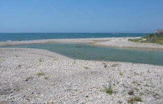 Vés a: Biodiversitat Sitges alerta de la «regressió» que pateix la desembocadura de la riera de Ribes