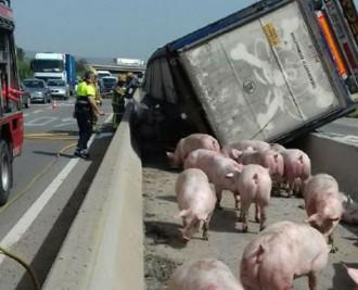 Vés a: VÍDEO Concentració en memòria dels porcs morts en l'accident d'un camió a Vila-seca