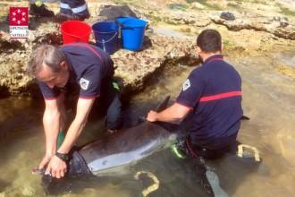 Vés a: Els bombers rescaten un dofí embarrancat a la platja de Benicarló