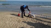 Vés a: Descobreixen una nova espècie d'estrella de mar al Delta de l'Ebre