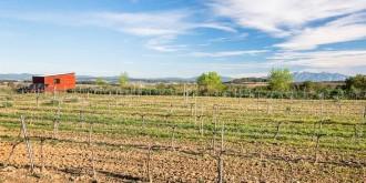 Vés a: Viure entre vinyes (al Penedès) és possible: així és la primera casa sostenible de tot l'Estat