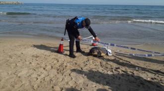 Vés a: Troben morta una tortuga a Sitges