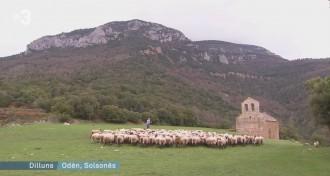 Vés a: Els ecologistes demanen el retorn del llop a Catalunya