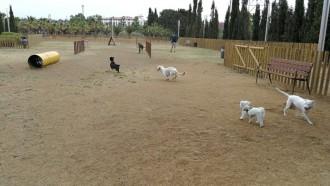 Vés a: Una ONG animalista demana la tutela de la gossa que va mossegar el penis d'un home a Reus