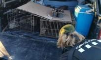 Vés a: Denuncien dos caçadors per repoblar conills sense autorització a Torà