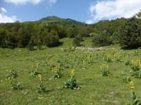 Vés a: Can Lleonart celebra 40 anys d'educació ambiental al Parc Natural del Montseny