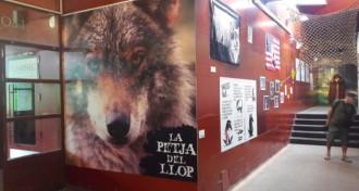 Vés a: Vall de Núria alberga l'exposició temporal «La petja del llop»