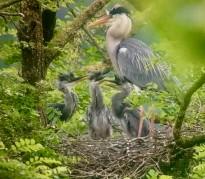 Vés a: Endesa instal·larà fundes aïllants en una línia d'alta tensió per a protegir l'avifauna