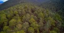 Vés a: Els arbres de fusta poc densa i fulles primes moren de set abans