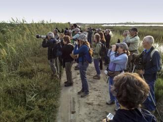 Vés a: Arriba el Delta Birding Festival, la fira ornitològica més important de la Mediterrània