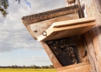 Vés a: Investigadors de Granollers alerten que les caixes refugi poden ser una trampa pels ratpenats