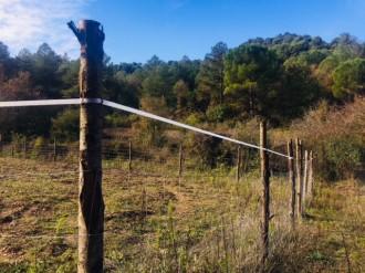 Vés a: Una guia ajudarà municipis i ramaders a reduir els danys fets pels senglars