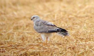Vés a: El segon anuari ornitològic del delta de l'Ebre ja es pot trobar en format digital