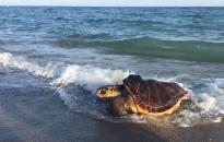 Vés a: Greenpeace denuncia la pesca destructiva de l'arrossegament