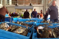 Vés a: El Govern impulsa la comercialització de la carn de caça i en garanteix la seguretat alimentària