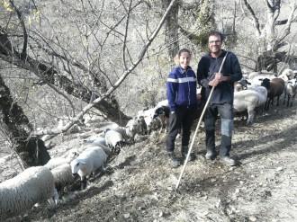 Vés a: L'apadrinament d'ovelles, nova eina de suport als pastors xisqueta
