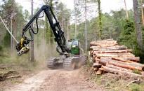 Vés a: La sequera estival de 2016 afecta un 2,2% dels boscos catalans