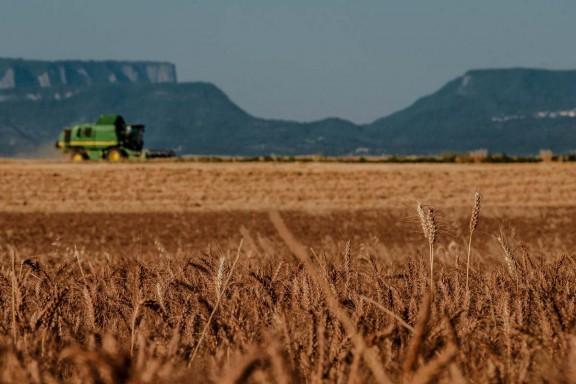 Vés a: L'excessiva fertilització de conreus de blat amb nitrogen pot explicar l'alta prevalença de la malaltia de celiaquia al món