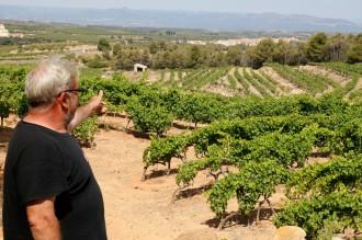 Vés a: L'onada de calor provoca greus pèrdues en les vinyes del Priorat, el Montsant i la Terra Alta