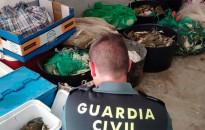 Vés a: Catalunya ha destruït el 33% de l'ocupació al sector pesquer