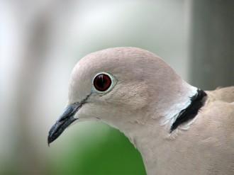Vés a: Només un 17% de les espècies en perill d'extinció estan emparades per les directives de la Unió Europea