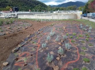 Vés a: Creen jardins de papallones a les depuradores de la Garrotxa per afavorir la biodiversitat