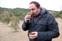 Vés a: Alcanar crea un catàleg municipal d'oliveres mil·lenàries per blindar-les de l'espoli