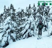 Vés a: Els Agents Rurals troben un exemplar de silur al Parc Natural del Montseny