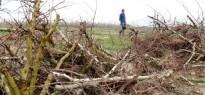 Vés a: Salven de l'extinció la carxofa morada del Vallès
