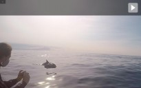 Vés a: Navegant amb una vintena de dofins juganers davant la costa de l'Ametlla de Mar