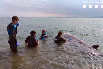 Vés a: Trobada una balena de quatre metres varada al Trabucador