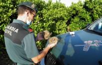 Vés a: Primers passos del Govern per a la nova llei de caça de Catalunya